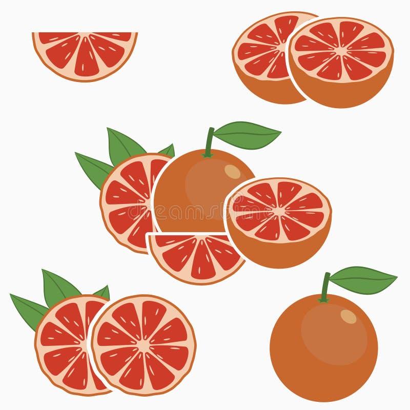 葡萄柚 E 向量 向量例证