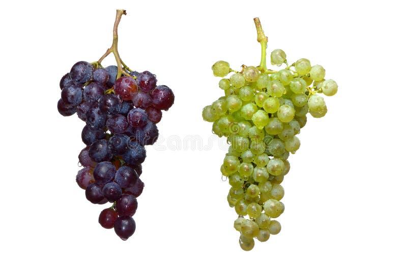 葡萄树两 免版税库存照片