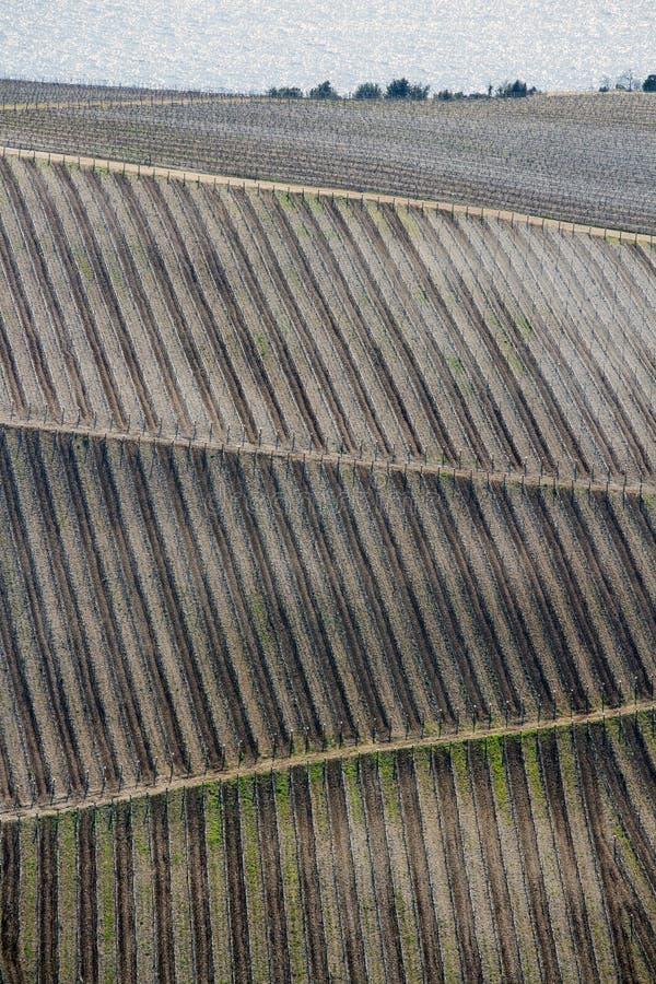 葡萄树条纹在小山的 库存照片