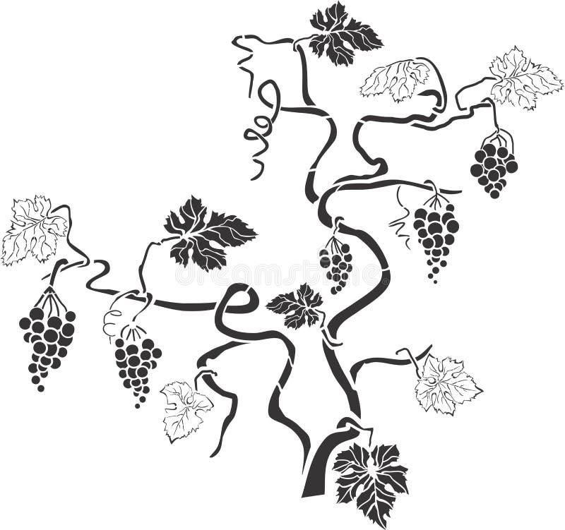 葡萄树3 库存照片