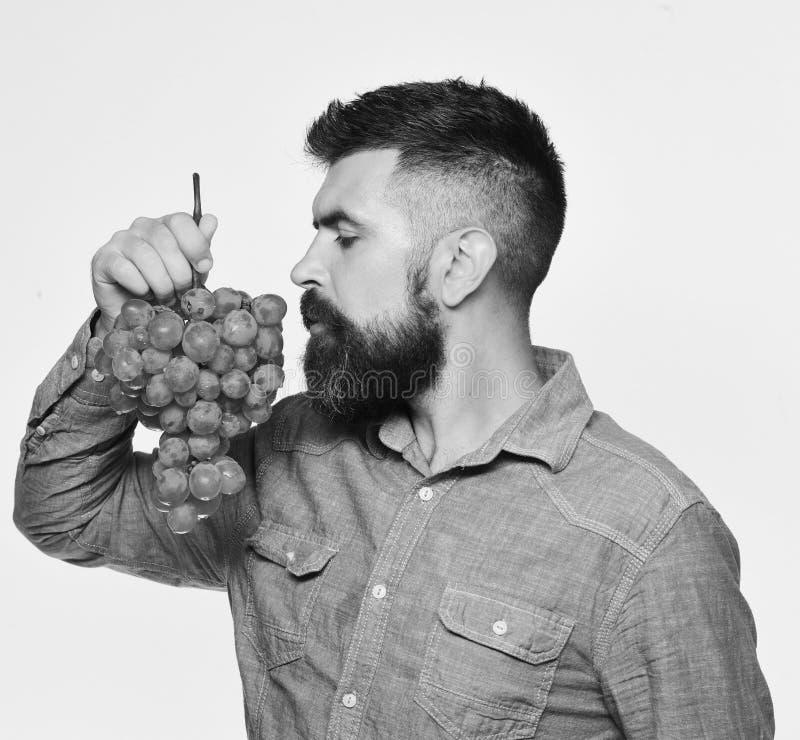 葡萄栽培和从事园艺的概念 有梦想的面孔的种葡萄并酿酒的人嗅到葡萄 免版税库存图片
