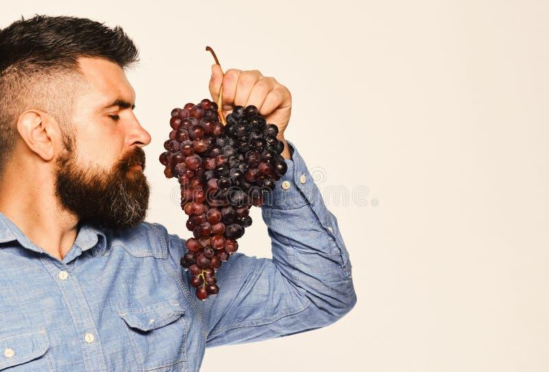 葡萄栽培和从事园艺的概念 有胡子的人拿着黑葡萄 免版税库存图片