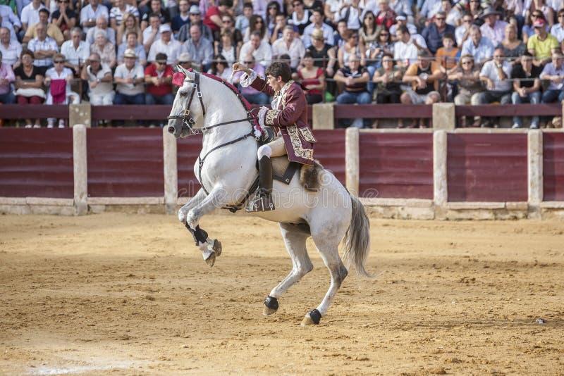 葡萄牙在马背上斗牛士若昂Moura斗牛 库存照片