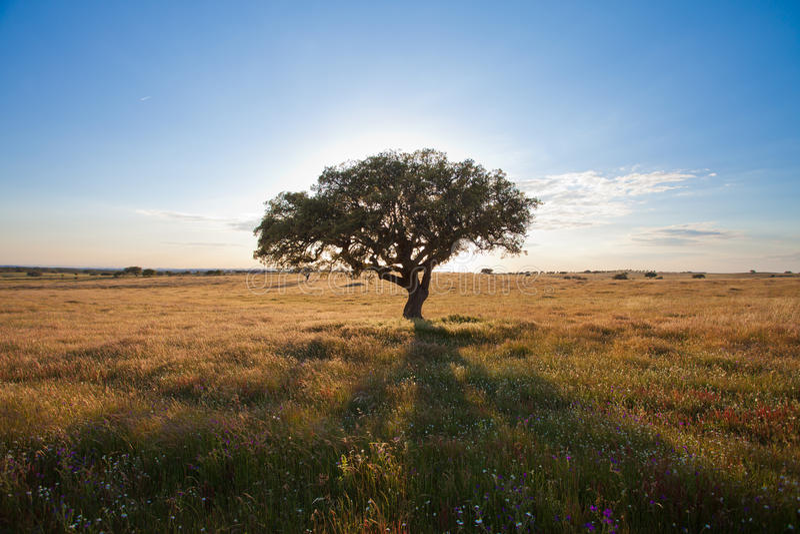 葡萄牙-自然 免版税库存照片
