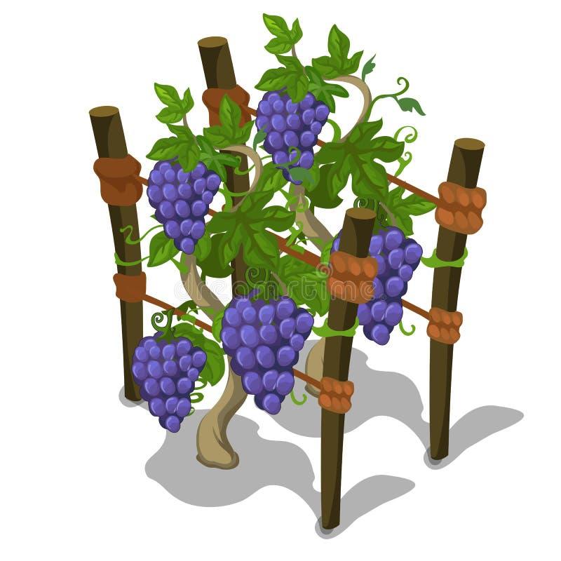 葡萄的种植和耕种 向量 库存例证