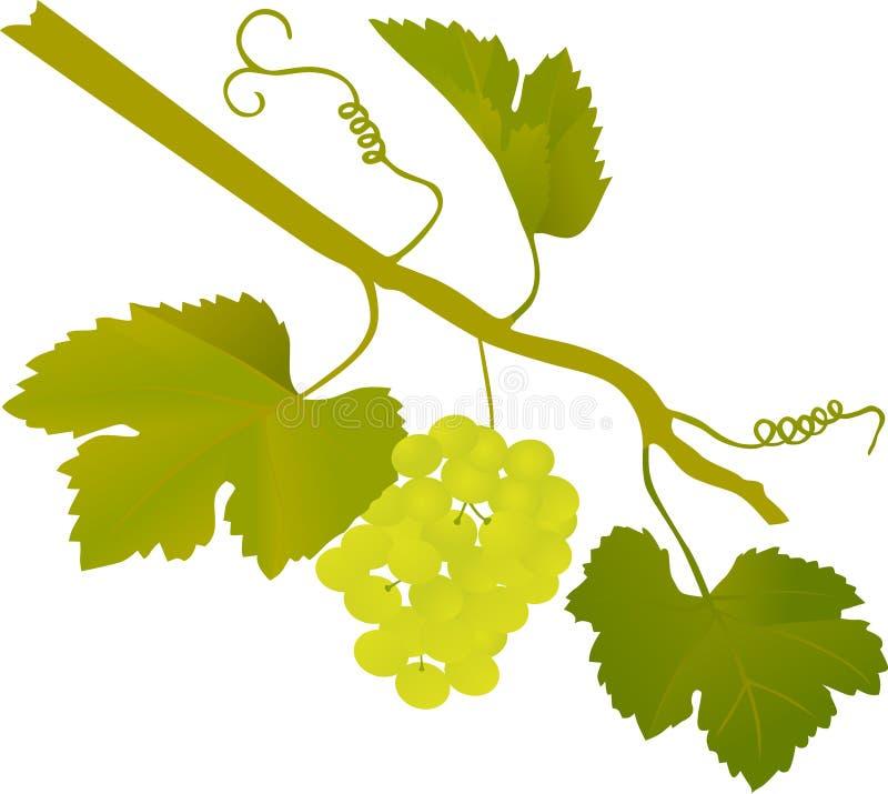 葡萄绿色例证 向量例证