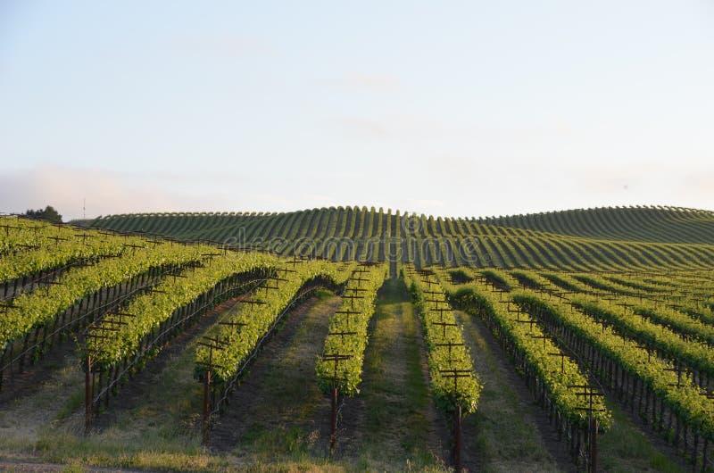 葡萄调遣在途中的纳帕谷到圣罗莎 免版税库存照片
