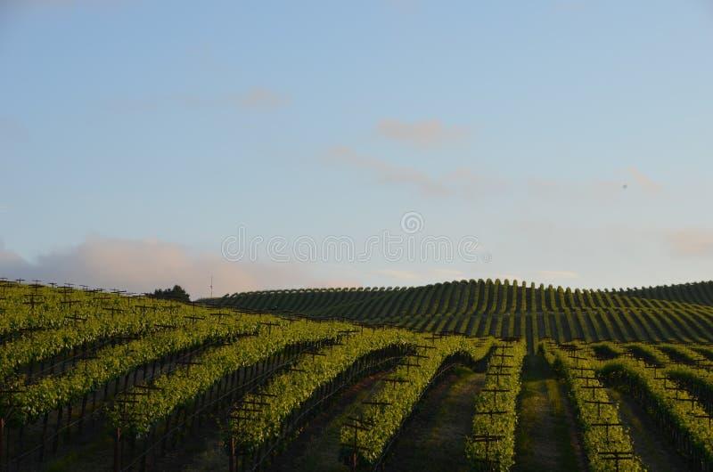 葡萄调遣在途中的纳帕谷到圣罗莎 图库摄影