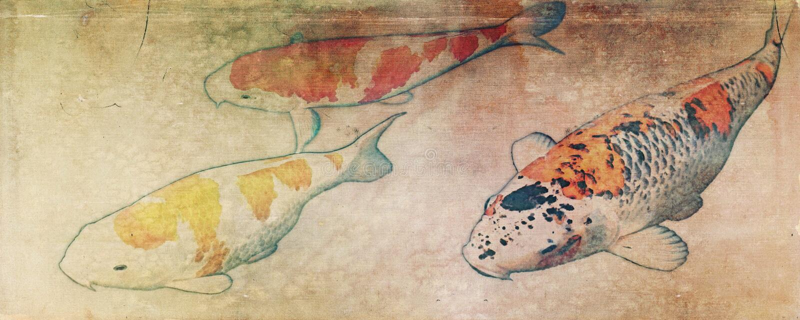 葡萄酒三koi鱼 皇族释放例证