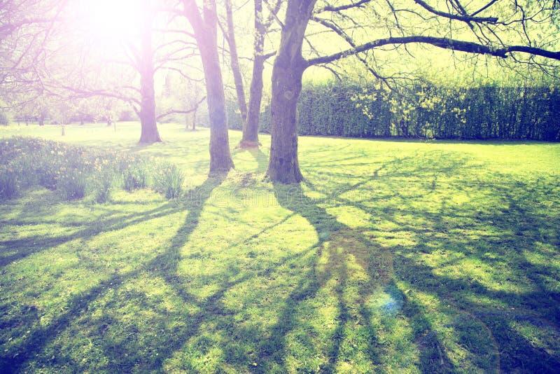 葡萄酒上色了晴朗的被弄脏的春季公园树 库存图片