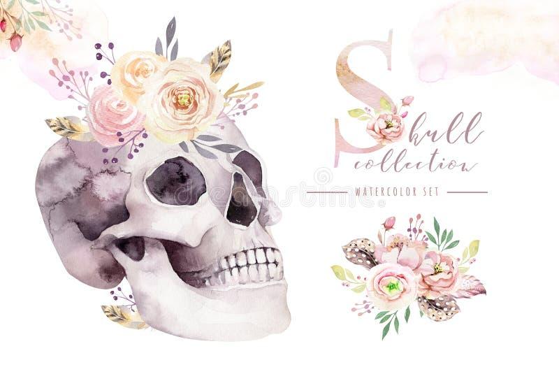 葡萄酒与头骨和玫瑰,野花,在白色在boho样式的手拉的例证的水彩卡片隔绝的 库存例证