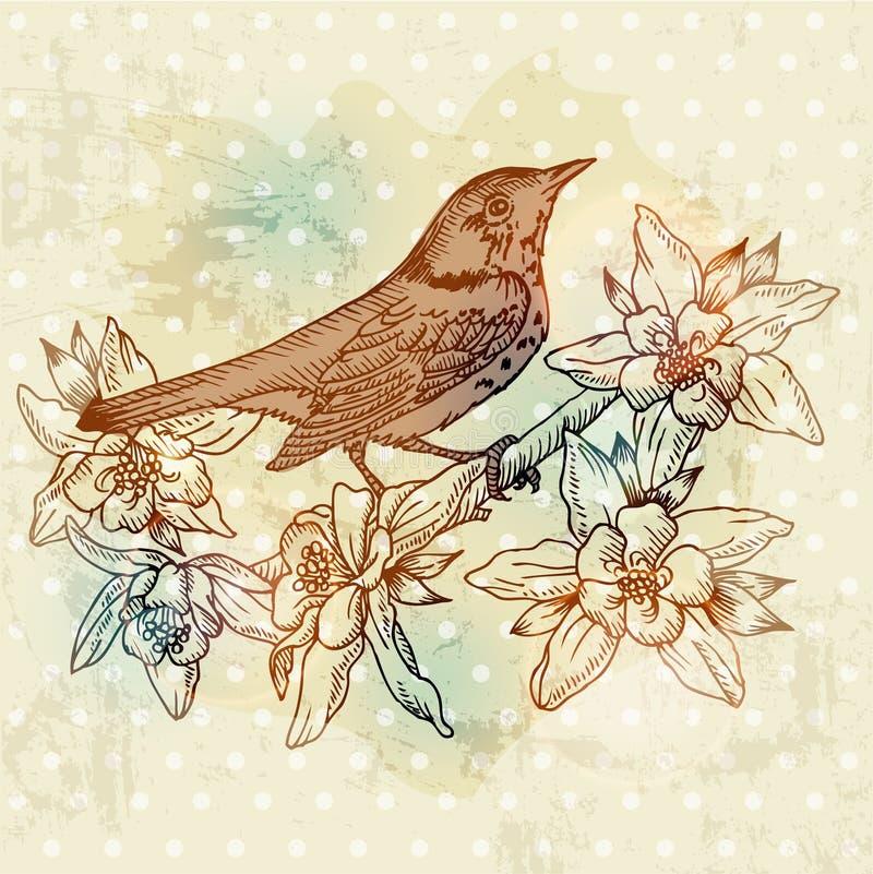葡萄酒与鸟的春天看板卡 向量例证
