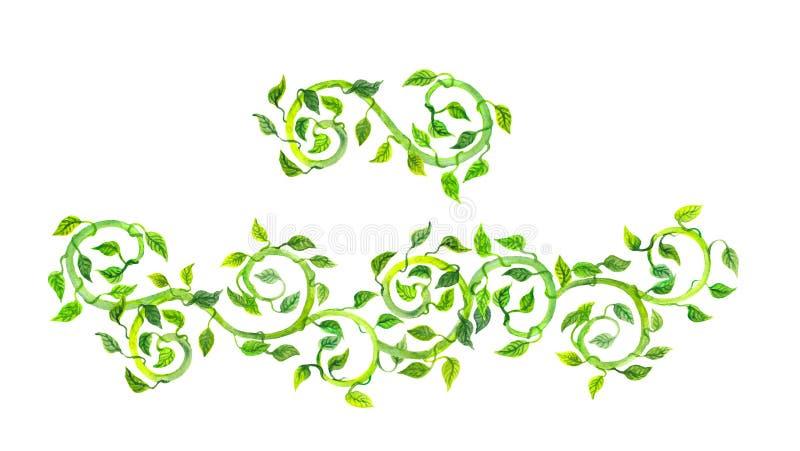 葡萄酒与绿色纸卷和叶子的分离器分切器 水彩 库存图片