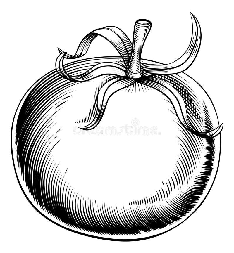 葡萄酒减速火箭的木刻蕃茄 皇族释放例证