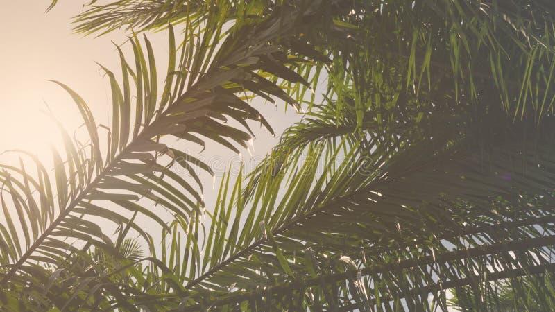 葡萄酒剪影棕榈叶分支树本质上背景的 库存照片