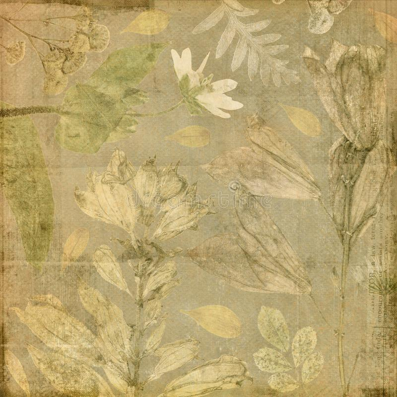 葡萄酒古色古香的植物的花卉拼贴画纸背景 向量例证