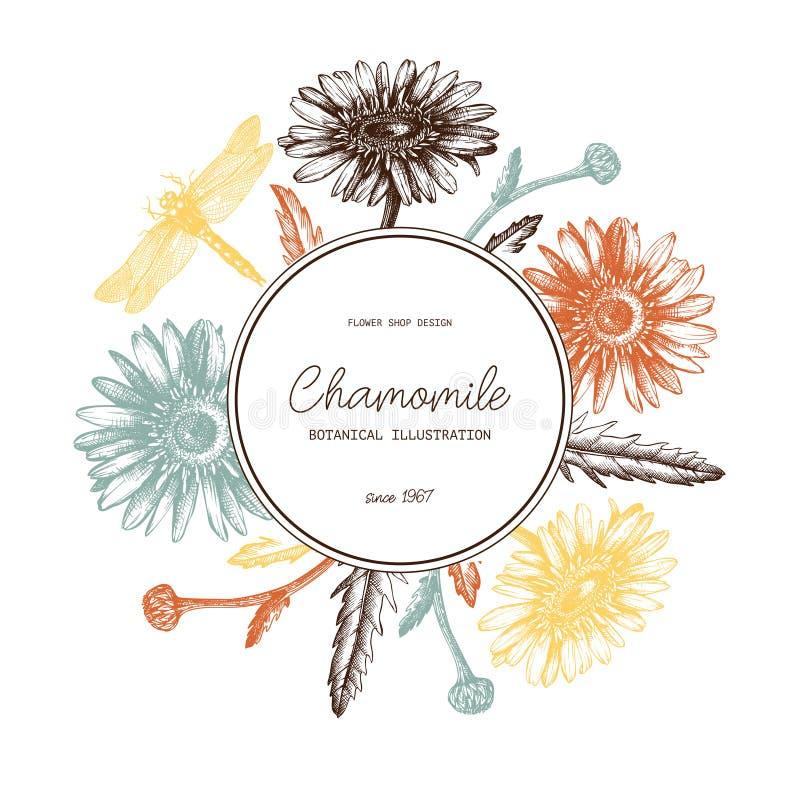 葡萄酒在回合的卡片或邀请设计 手拉和高详细的春黄菊花和蜻蜓剪影 flor 库存例证