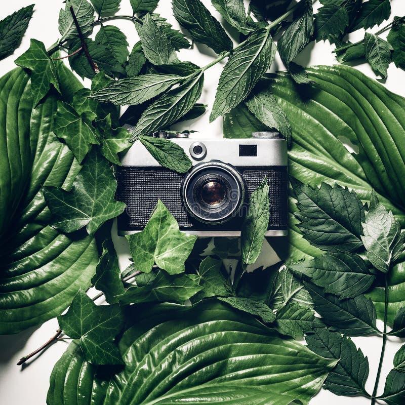 葡萄酒在绿色叶子的影片照相机,顶视图 减速火箭的技术创造性的概念 库存图片
