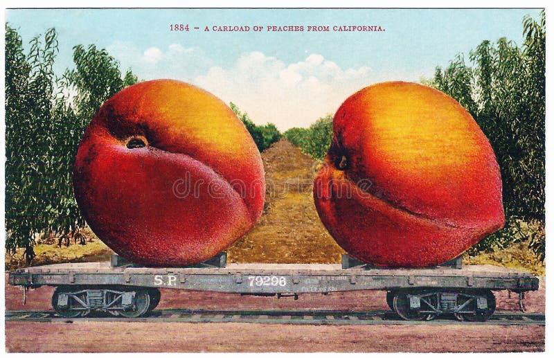 葡萄酒夸大明信片艺术品巨型桃子20世纪20世纪10年代 库存照片
