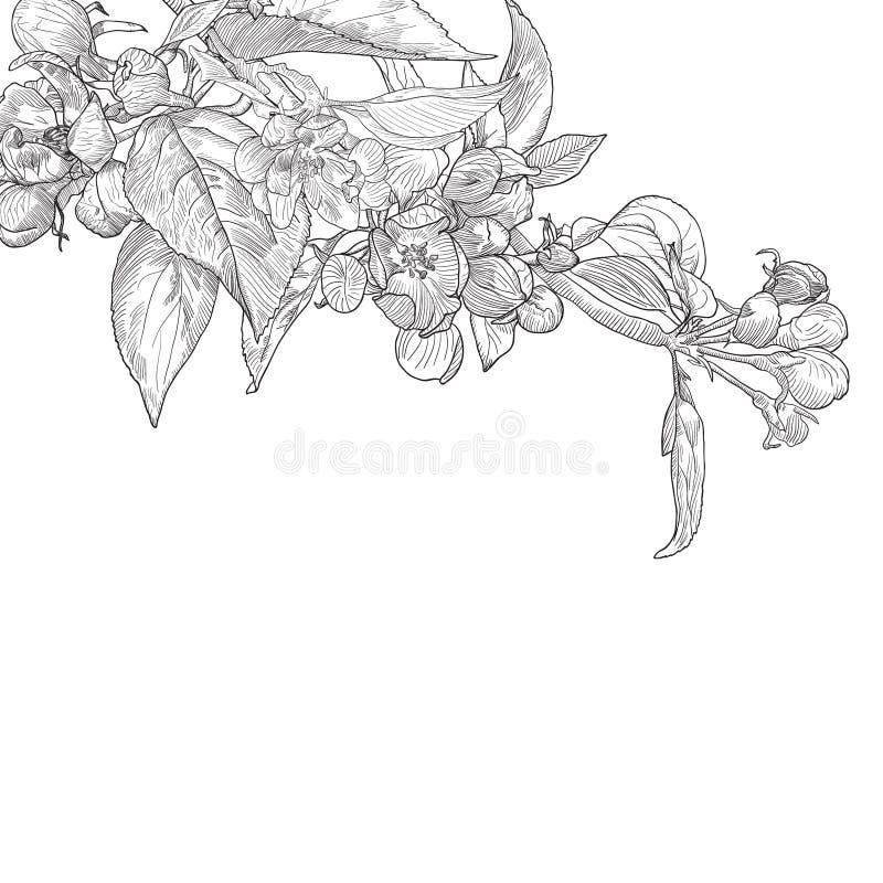 葡萄酒手拉的开花的苹果树枝杈 皇族释放例证