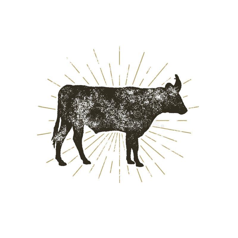葡萄酒手拉的母牛象 牲口剪影形状 与旭日形首饰的减速火箭的黑样式母牛,隔绝在白色 向量例证