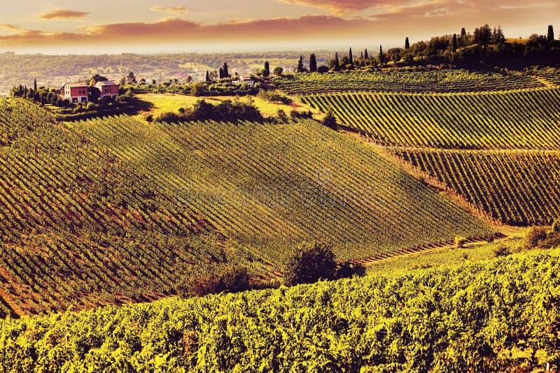 葡萄酒托斯卡纳的视图小山有葡萄园的 免版税库存照片