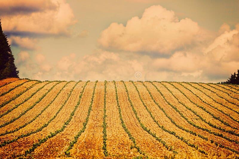 葡萄酒托斯卡纳的视图小山有葡萄园的 图库摄影