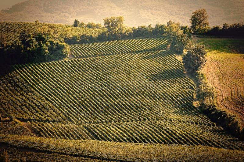 葡萄酒托斯卡纳的视图小山有葡萄园的 库存图片