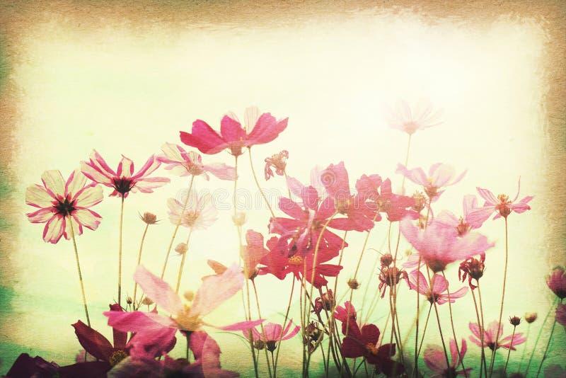 葡萄酒明信片,在领域的波斯菊花,在老纸纹理样式的柔光 库存照片