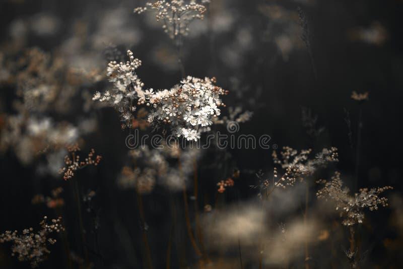 葡萄酒春天神色照片  东部灰色灰鼠 黑白和黄色照片野花  免版税图库摄影