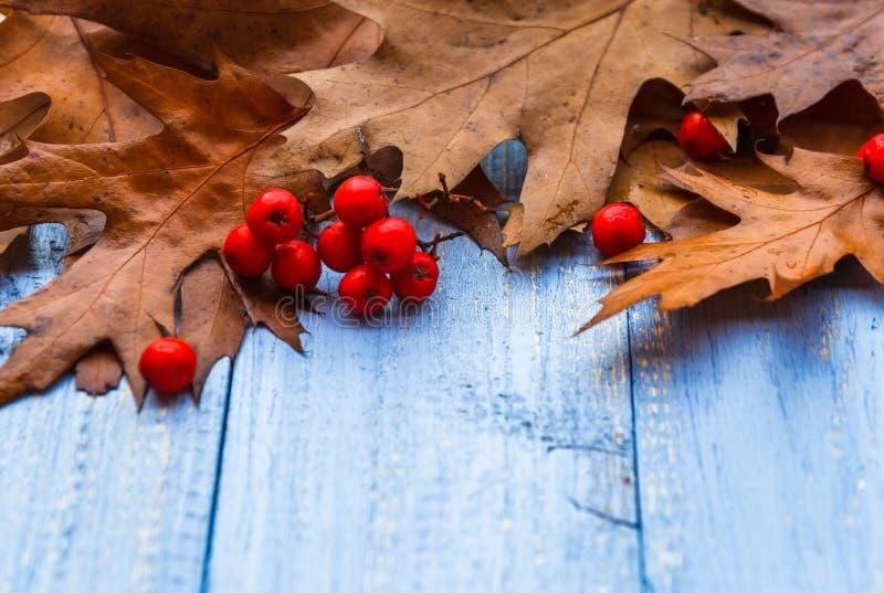 葡萄酒构成秋天果子木背景 库存图片