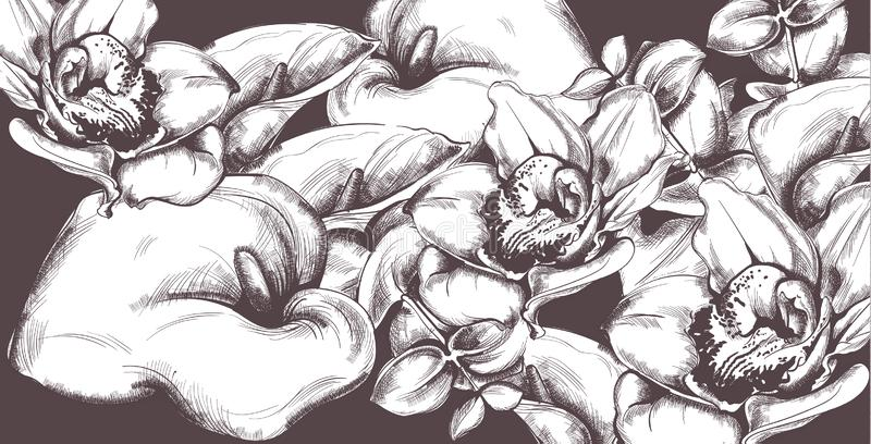 葡萄酒样式水芋属花和兰花线艺术传染媒介 老作用背景 皇族释放例证