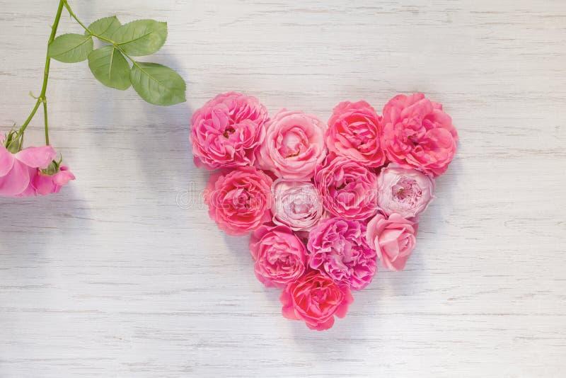 葡萄酒桃红色的心脏上升了在白色木背景和分支与绿色叶子,顶视图的花 免版税库存照片