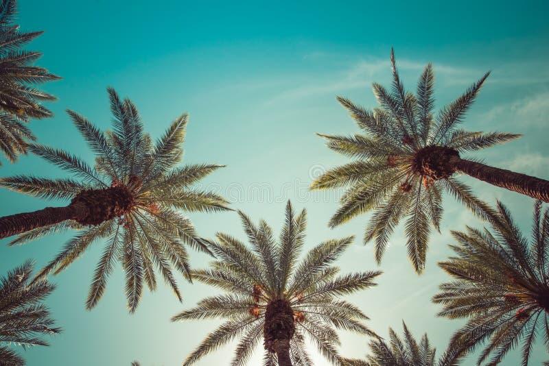 葡萄酒棕榈发辫在好莱坞 库存照片