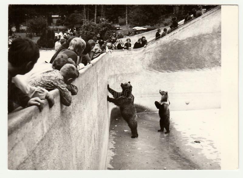 葡萄酒照片展示人参观动物园 在熊护城河的两头熊立场 库存照片