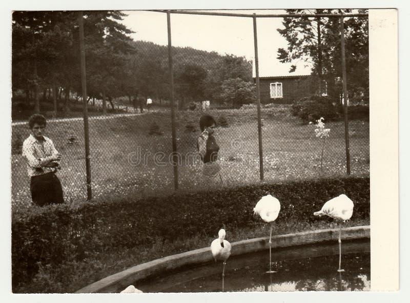 葡萄酒照片展示人参观动物园 免版税图库摄影