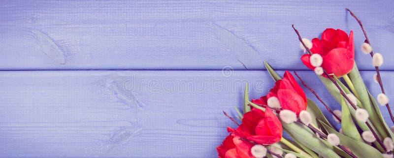 葡萄酒照片,与杨柳,欢乐装饰,文本的拷贝空间的枝杈的红色郁金香在委员会 库存照片