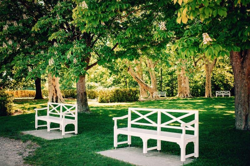 葡萄酒艺术白色长木凳在公园在开花的栗树下 库存图片