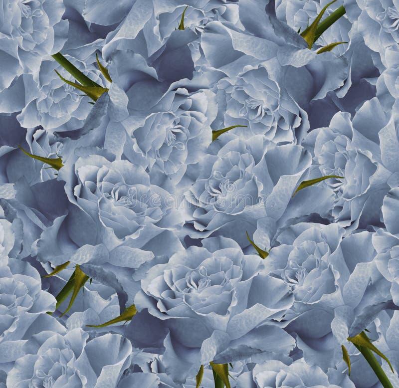 葡萄酒花卉浅兰的美好的背景 背景构成旋花植物空白花的郁金香 花花束从浅兰的玫瑰的 特写镜头 向量例证