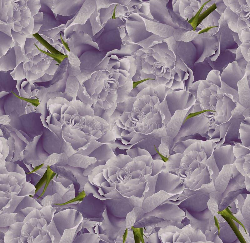 葡萄酒花卉紫罗兰色美好的背景 背景构成旋花植物空白花的郁金香 花花束从浅紫色的玫瑰的 特写镜头 库存例证