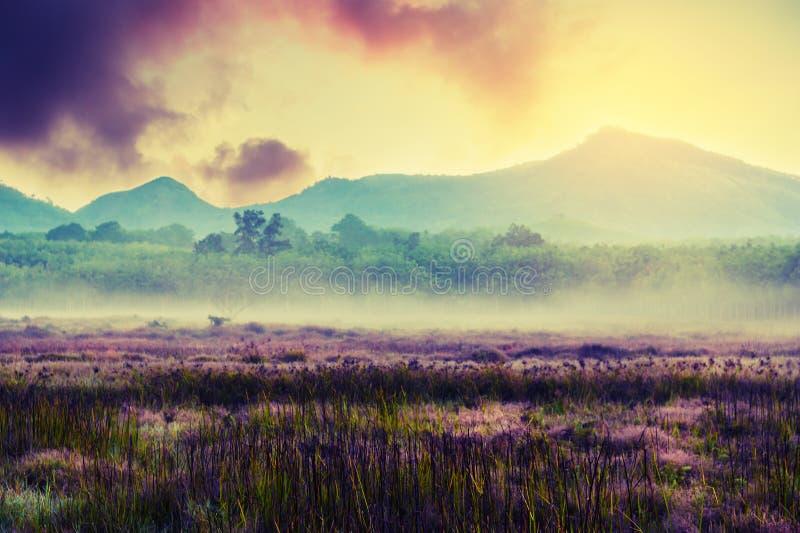 葡萄酒风景自然背景 免版税库存照片