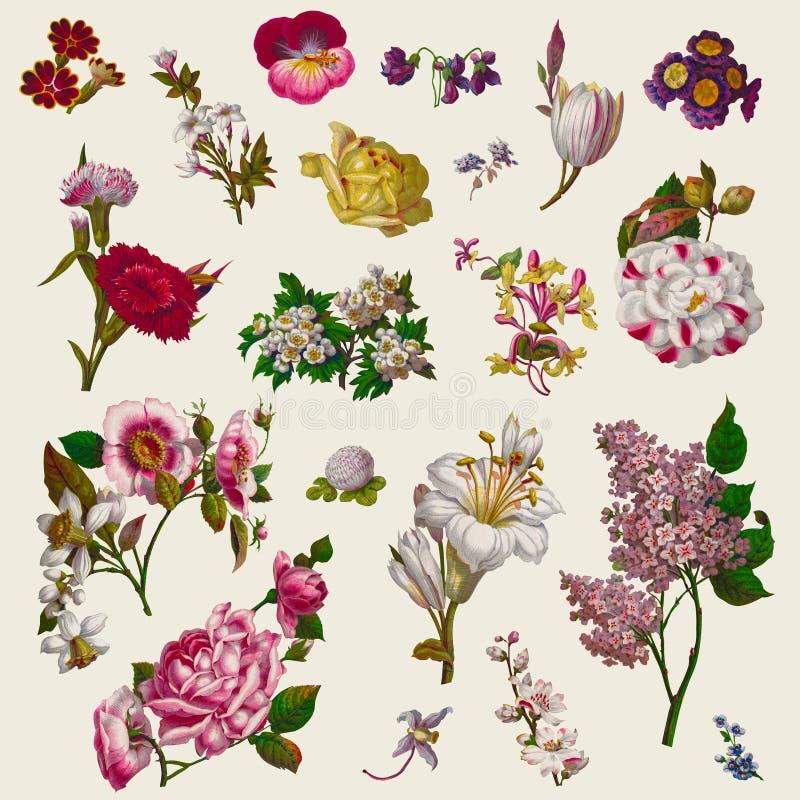 葡萄酒维多利亚女王时代开花剪贴美术 向量例证