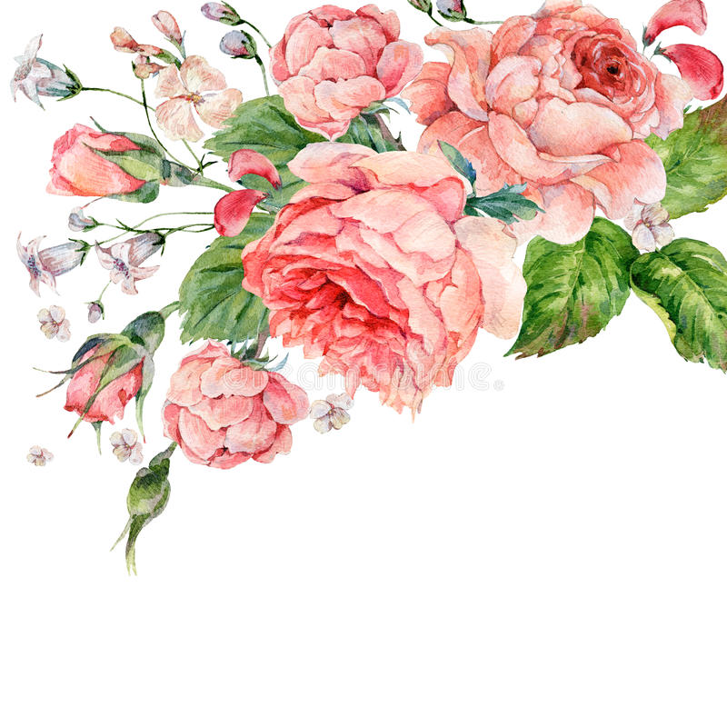 葡萄酒水彩桃红色英国玫瑰 向量例证