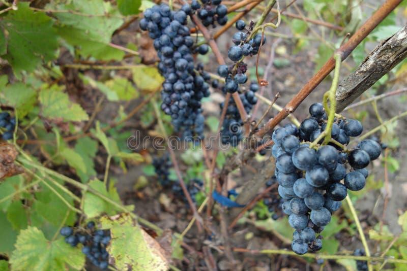 葡萄酒 免版税库存图片