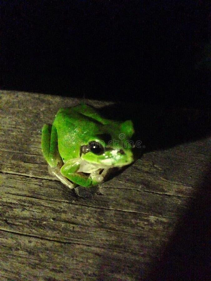 葡萄青蛙 免版税库存图片