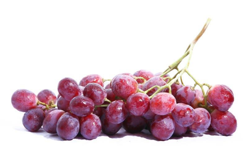 葡萄-主要品种 库存图片