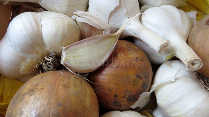 葱和大蒜 库存图片