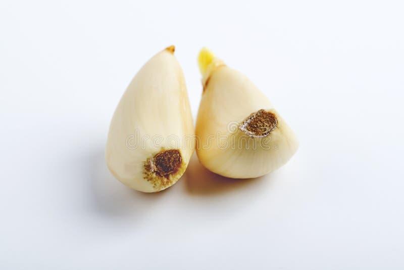 葱属丁香丁香新鲜的大蒜 被隔绝的照片 免版税库存图片