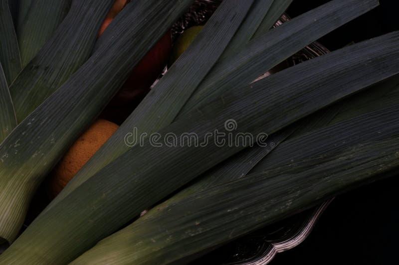 葱属ampeloprasum菜韭葱静物画 库存图片