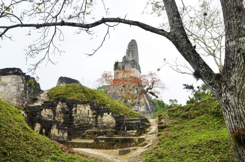蒂卡尔危地马拉玛雅废墟  图库摄影